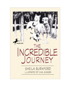 The-Incredible-Journey--WEB