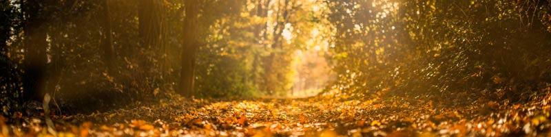 fall--800-x-200